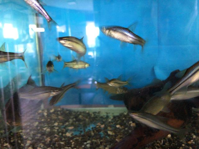 ミニ水族館